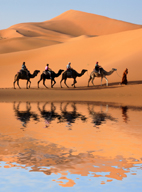 Camel caravan going along the lake the Sahara Desert, Algeria.